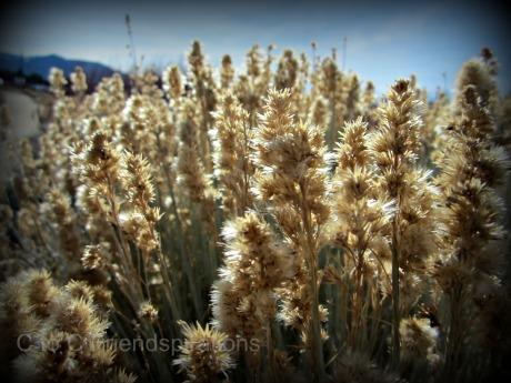 Tahoe 2012 A
