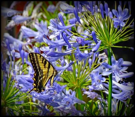 Summer 2013 Butterfly